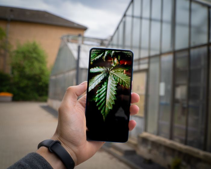 smartphone with cannabis leaf on the screen